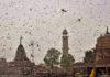 ভারতের দিকে ফের ধেয়ে আসছে ঝাঁকে ঝাঁকে পঙ্গপাল